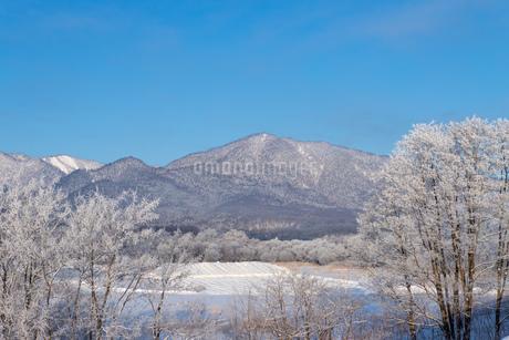 北海道冬の風景 富良野の樹氷の写真素材 [FYI04108467]