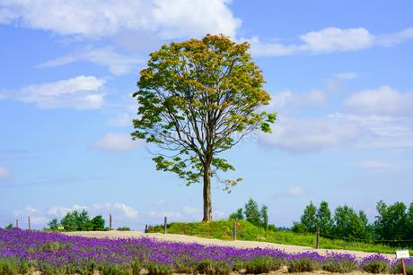 青空と木の写真素材 [FYI04108748]