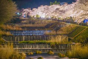 宮城野早川堤の桜の写真素材 [FYI04108761]