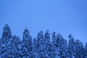 ブルーモーメントに包まれる冬の森の写真素材 [FYI04109089]