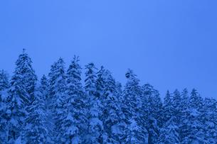 ブルーモーメントに包まれる冬の森の写真素材 [FYI04109091]