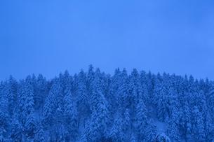 ブルーモーメントに包まれる冬の森の写真素材 [FYI04109092]