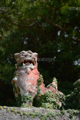 沖縄の魔除けのシーサーの写真素材 [FYI04109138]