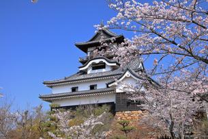 4月 国宝犬山城と桜の写真素材 [FYI04109157]