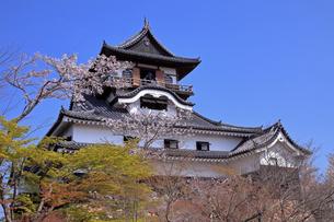 4月 国宝犬山城と桜の写真素材 [FYI04109158]