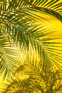 緑と黄色の写真素材 [FYI04109173]