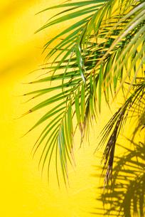 緑と黄色の写真素材 [FYI04109176]