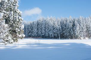 冬景色の写真素材 [FYI04109196]