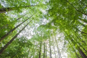 爽やかな林の写真素材 [FYI04109213]