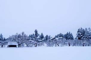 信州 長野県大町市常盤地区 安曇野の冬 吹雪の後にの写真素材 [FYI04109328]