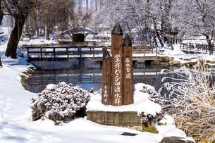 信州 長野県安曇野市 冬の安曇野わさび田湧水群公園の写真素材 [FYI04109332]