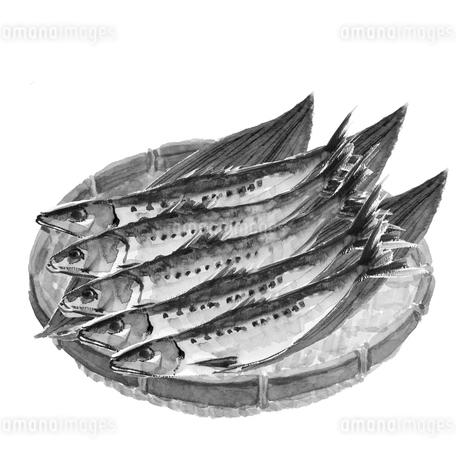 ざるに並べたイワシ 鰯 5尾 水彩 ザル 笹 水墨画風 モノトーンのイラスト素材 [FYI04109555]