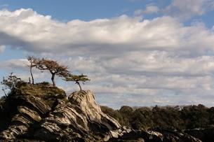 見下ろす木の写真素材 [FYI04109628]