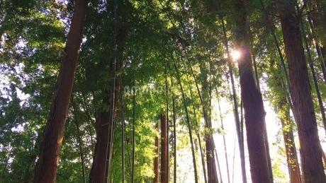 木漏れ日の写真素材 [FYI04109651]
