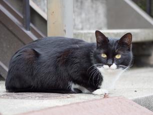 地面に座る黒い野良猫の写真素材 [FYI04109806]