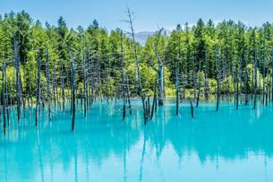 北海道美瑛町の青い池の写真素材 [FYI04110365]