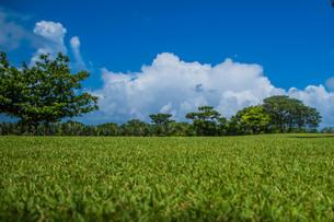 青空と芝生の写真素材 [FYI04110366]