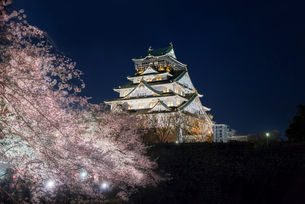 ライトアップされた大阪城と満開の桜の写真素材 [FYI04110541]