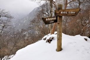 厳冬の山地 檜洞丸の写真素材 [FYI04110571]