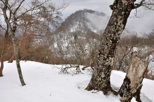 雪の山地 檜洞丸よりテシロノ頭の写真素材 [FYI04110572]