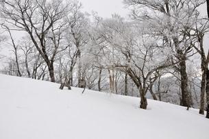 大雪に霧氷の写真素材 [FYI04110582]