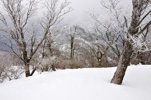 大雪に霧氷の写真素材 [FYI04110585]
