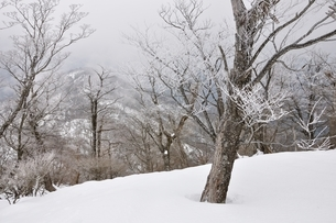 大雪に霧氷の写真素材 [FYI04110586]
