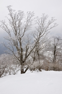 大雪に霧氷の写真素材 [FYI04110587]