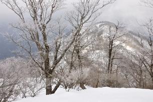 大雪に霧氷の写真素材 [FYI04110588]