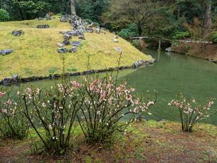 【香川県 高松市】 栗林公園の中にあるボケの花と睡竜譚の写真素材 [FYI04110637]