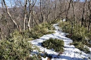 雪のブナ沢乗越の写真素材 [FYI04110713]
