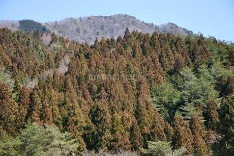 春色の鳥ノ胸山の写真素材 [FYI04110733]