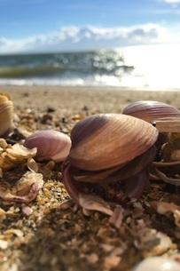 砂浜の貝殻の写真素材 [FYI04111047]