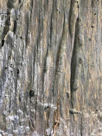 100年前の材木の表面の写真素材 [FYI04111050]