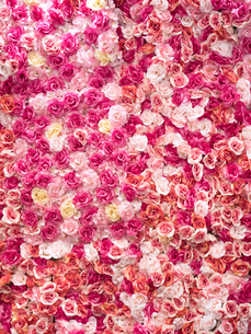 造花を貼りつめた壁面の写真素材 [FYI04111119]