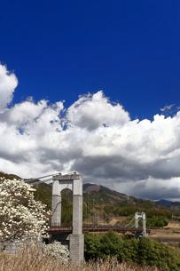 県立秦野戸川公園 風の吊り橋の写真素材 [FYI04111249]