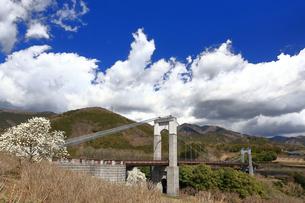 県立秦野戸川公園 風の吊り橋の写真素材 [FYI04111250]