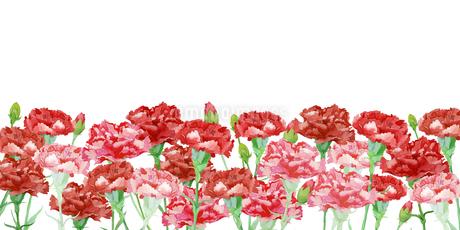 カーネーションの花畑のイラスト素材 [FYI04111289]