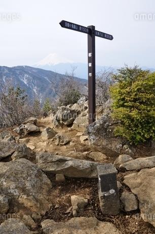 本社ヶ丸の山頂と富士山の写真素材 [FYI04111343]