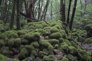 山犬嶽の写真素材 [FYI04111395]