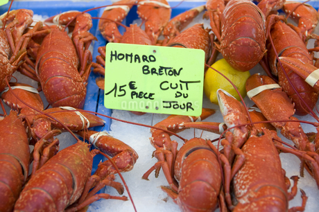 ブルターニュ産 オマール海老 フランス料理 高級食材の写真素材 [FYI04111477]