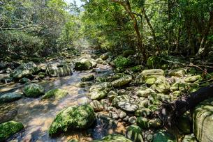 西表島のジャングルの写真素材 [FYI04111498]