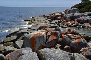 タスマニアのセントへレンズ近くのベイオブファイヤーの海岸の写真素材 [FYI04111544]