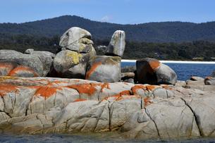 タスマニアのセントへレンズ近くのベイオブファイヤーの海岸の写真素材 [FYI04111547]