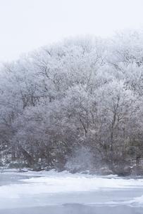 冬の朝  霧氷に包まれる湖畔の木々の写真素材 [FYI04112380]