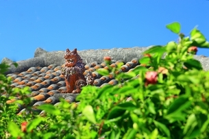 赤瓦屋根とシーサーの写真素材 [FYI04112542]