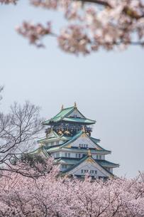 春の大阪城・城視点の写真素材 [FYI04112652]
