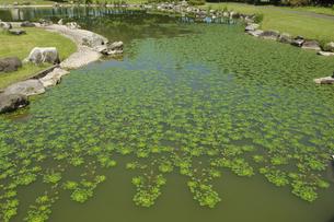 池の写真素材 [FYI04113056]