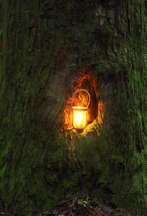 大木の穴の中のカンテラの美しい光の写真素材 [FYI04113320]