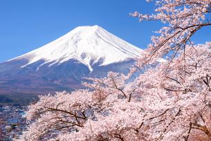 桜と富士山 富士吉田市よりの写真素材 [FYI04113686]